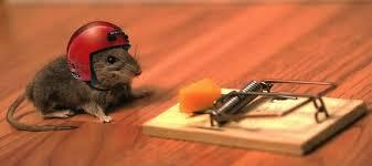 risico-nemen-muis